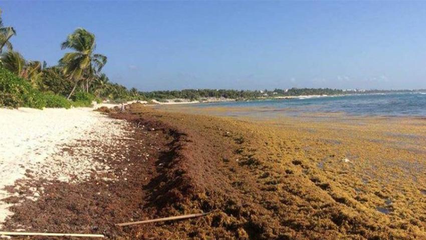 Arribo de sargazo a las costas del Caribe Mexicano para el 2021