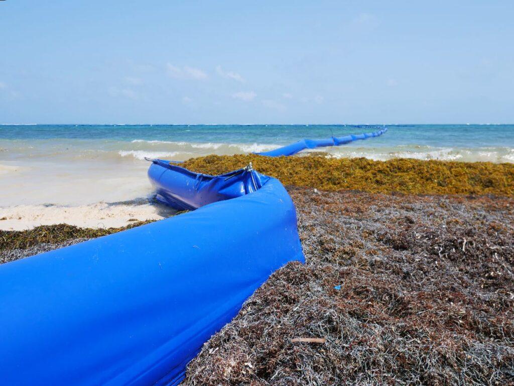 Sargazo en Quintana Roo