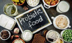 probioticos