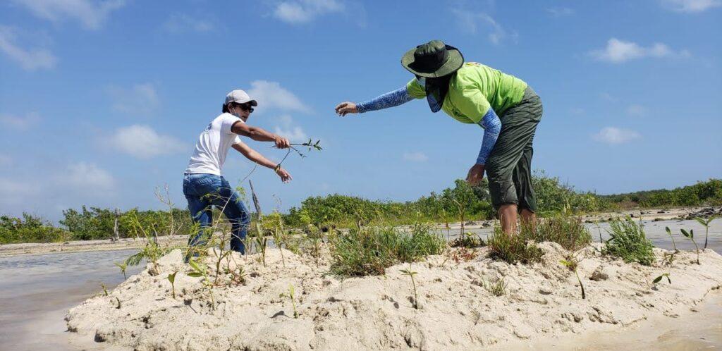 Cozumel: inician prácticas de campo en la restauración del ecosistema de manglar
