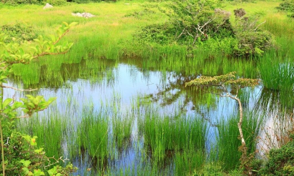 Humedales: ecosistemas olvidados a pesar de ser los más necesitados