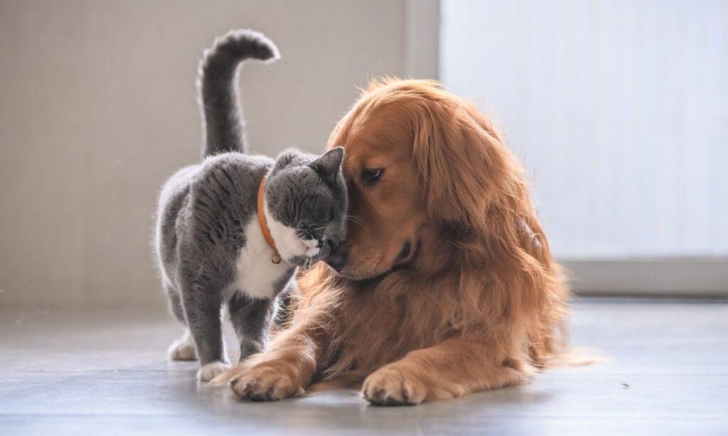 7 Consejos para que tus mascotas vivan felices